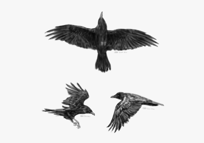 Common Raven Flight Tattoo Idea Little Crow - Crow Tattoo Designs ...