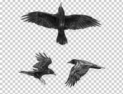 Common Raven Flight Tattoo Idea Little Crow PNG, Clipart ...