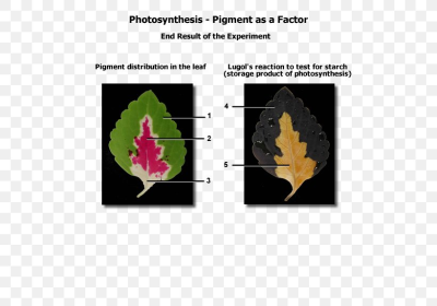 Biological Pigment Biology Photosynthesis Photosynthetic Pigment ...