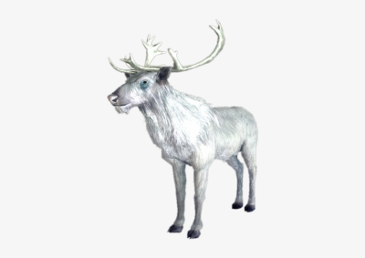 White Stag - Skyrim White Deer - 375x500 PNG Download - PNGkit