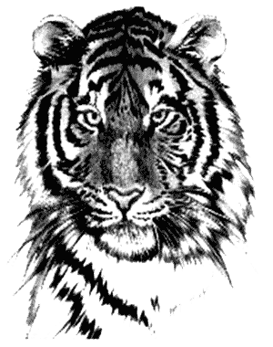 Tiger Tattoos Png Image