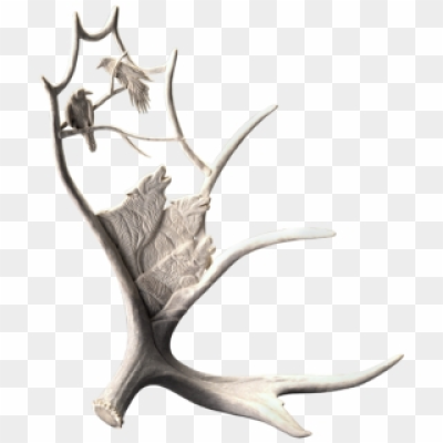 Shop « Shane Wilson Moose Antlers, Cement Art, Deer - Deer, HD Png ...
