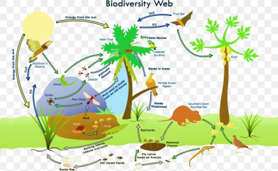 Biodiversity Loss Global Biodiversity Ecosystem Biology, PNG ...