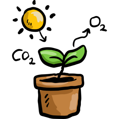 plant, sun, education, nature, Biology, Co2, Photosynthesis icon