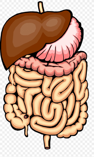 Digestion Physical Change Human Digestive System Chemical Change ...