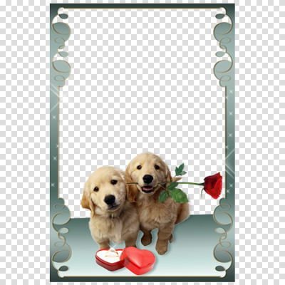 Two golden Labrador puppies, Love Frames frame Android, Puppy ...