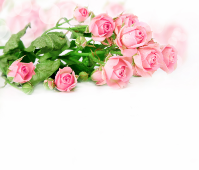 Delicate Pink Roses Background | Gallery Yopriceville - High ...