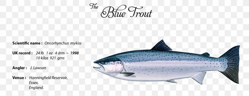 Sardine Trout Fish Products Oily Fish Thunnus, PNG, 1500x583px ...