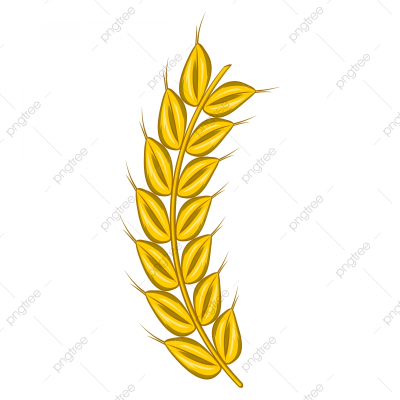 Stalk Of Ripe Barley Icon Cartoon Style, Barley, Beer, Cartoon PNG ...