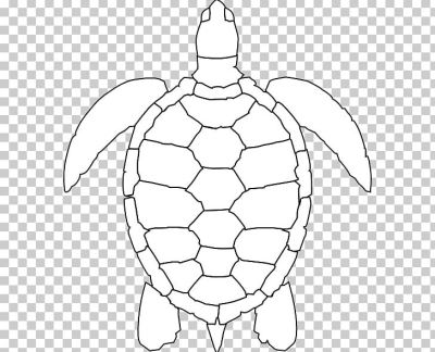 Green Sea Turtle Drawing PNG, Clipart, Animal, Area, Artwork, Ball ...