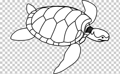 Green sea turtle , Turtle Outline s PNG clipart | free cliparts ...