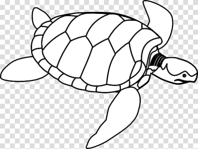 Green sea turtle , Turtle Outline transparent background PNG ...