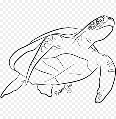 drawn sea turtle line drawing - sea turtle line art PNG image with ...