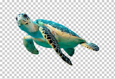 Hawksbill sea turtle Green sea turtle , Turtle element, green sea ...