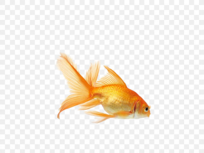 Common Goldfish Koi Aquarium Fish Feeder, PNG, 866x650px, Common ...