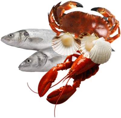 Download Seafood Png - Fish And Seafood Png PNG Image with No ...