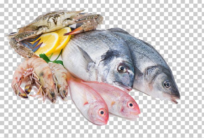 Squid As Food Fish Seafood Meat PNG, Clipart, Animals, Animal ...