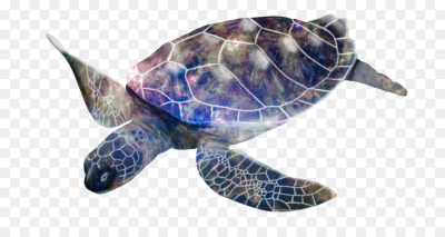 Sea Turtle Background png download - 800*466 - Free Transparent ...