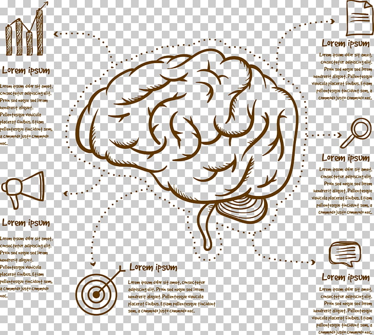 Human brain Cerebrum Infographic, Brain mapping PNG clipart | free ...