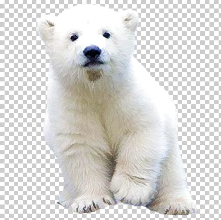 Polar Bear PNG, Clipart, Animals, Bea, Carnivoran, Cute Animal ...