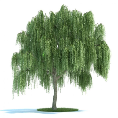 Salix Plant 45 AM58 Archmodels - max, obj, mxs, fbx 3D model ...