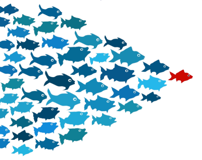 School of Fish Transparent PNG