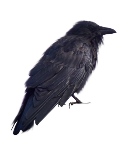 Crow PNG Transparent