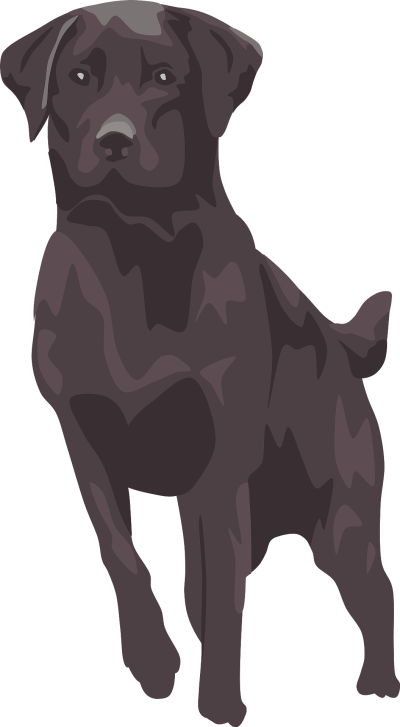 Black Labrador Dog Vector PNG