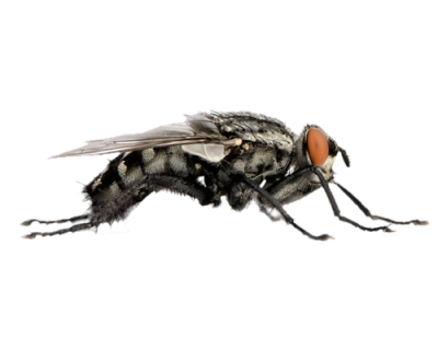 Flies File