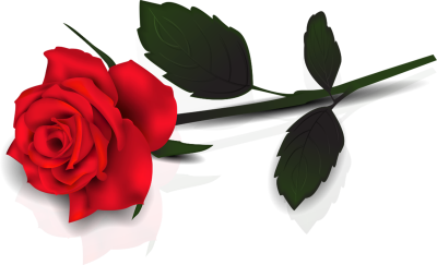 Single Red Rose Transparent