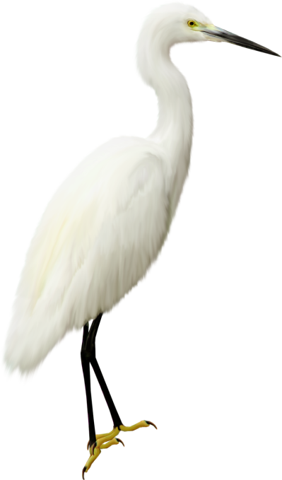 Heron Transparent PNG