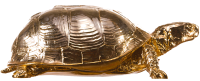 Box Turtle PNG Picture