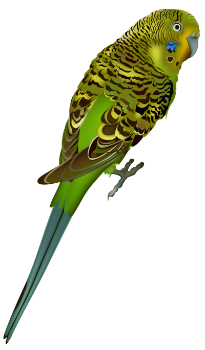 Bird-background-Birds-transparent