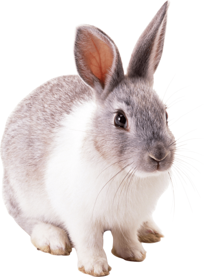 white-gray-rabbit