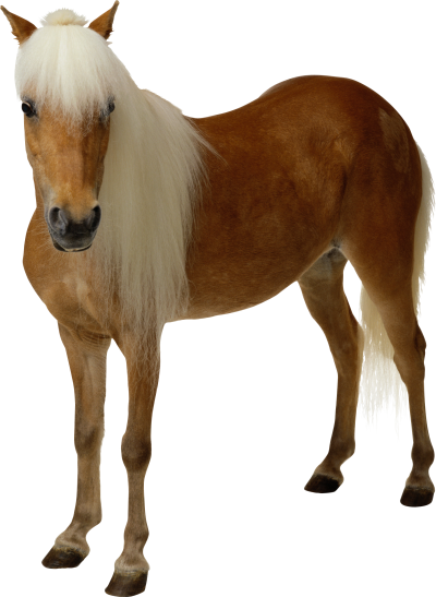 horse-clipart-background-brown-picture-transparent
