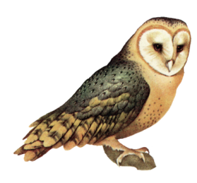 Owl High-Quality Png