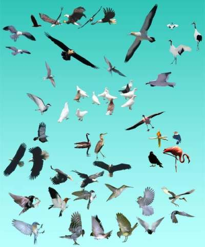 various birds summary 177555