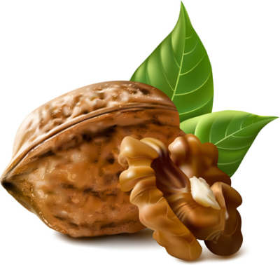 realistic-walnuts-design-vector_583570